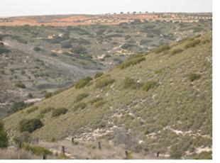 Caracterización y restauración de ecosistemas